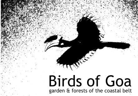 birdsofgoa