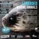 Stranded Marine Animals | A conversation #mondayfixgoa 28th June 7.30 pm